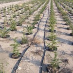drip-irrigation-gcc
