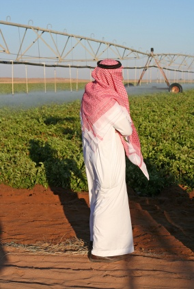 drip-irrigation-uae