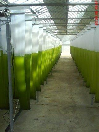 algae-photobioreactor