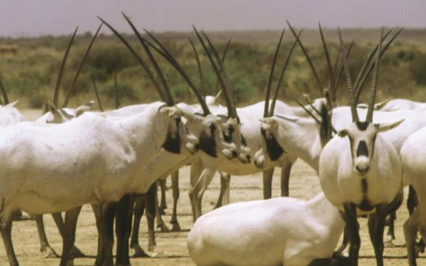 wildlife-jordan