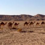 environment-jordan