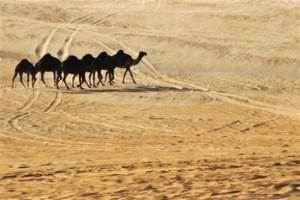 food-security-arab