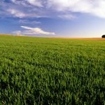 islam-farming