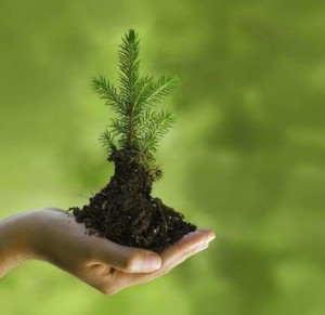 green-Prophet-Muhammad