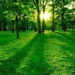islam-nature