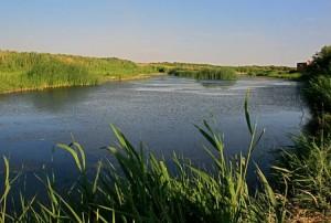 azraq-wetland-jordan