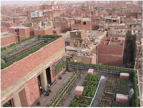Al-Zawya Al-Hamra green roof farms