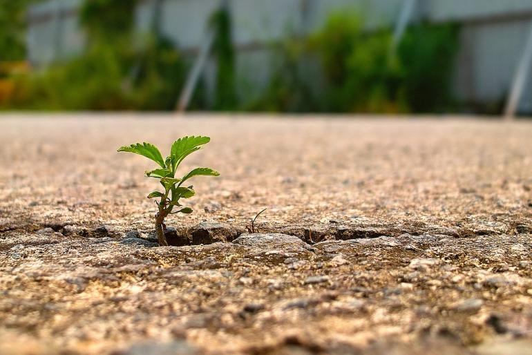 Sustainable development-Islam