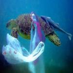turtle-plastic