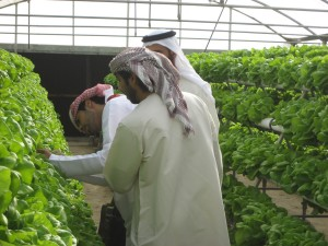 hydroponic-farming-middle-east