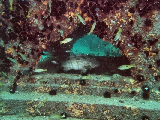 Artificial-Reef-Arabian-Gulf