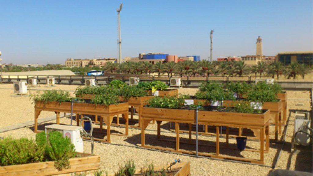 green-roof-auc