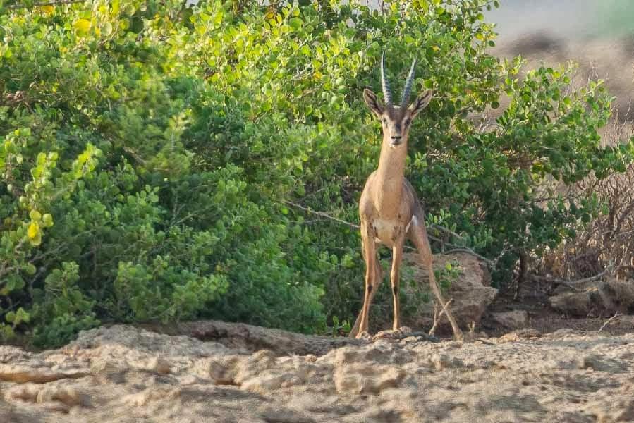 help stop wildlife poaching
