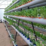 Urban and Peri-urban Agriculture in Gaza: Perspectives