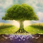 الفكر البيئي