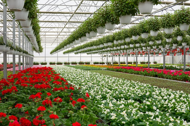 greenhouse-design-ideas