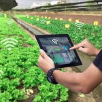 Mobile Agriculture in Egypt: Food for Thought