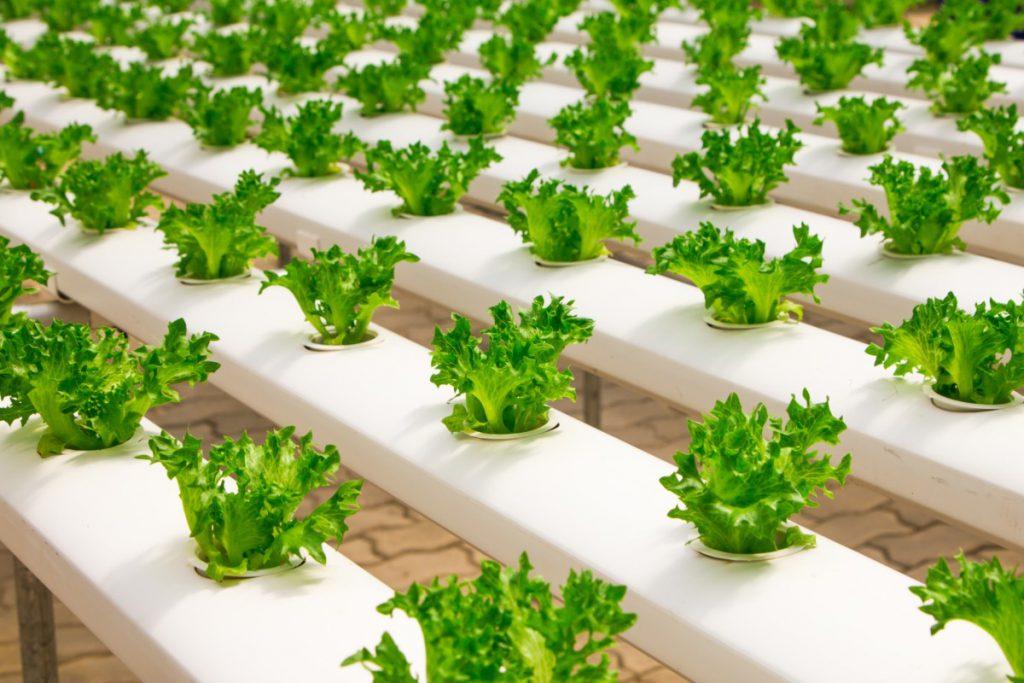 benefits of hydroponic farming